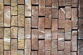 Hirnholz
