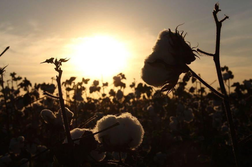 Naturfasern Baumwolle