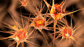 Nervenzellen Innere Uhr