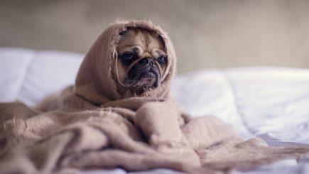 Gehören Haustiere ins Schlafzimmer - ja oder nein ?